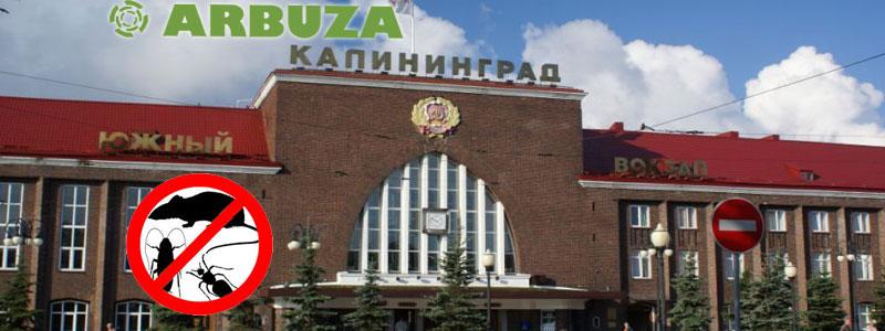 Уничтожение клопов и тараканов в Калининграде