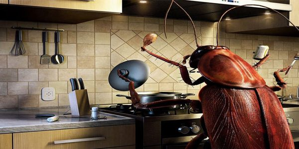 избавиться от тараканов в квартире